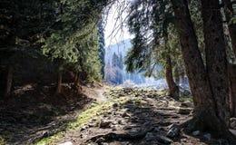 Wald in den Bergen Stockbild