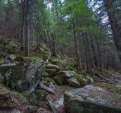 Wald in den Bergen Stockbilder