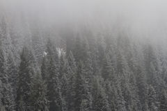 Wald in den Bergen Lizenzfreies Stockbild