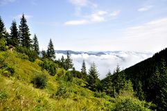 Wald in den Bergen auf einem Hintergrund von Wolken lizenzfreie stockbilder