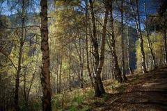 Wald in den Bergen im Herbst stockbild