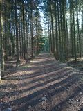 Wald in den hübschen Farben stockbild