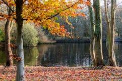 Wald in den Herbstfarben lizenzfreies stockfoto