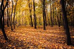 Wald in den Herbstfarben Stockbild