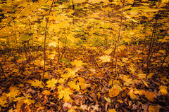 Wald in den Herbstfarben Lizenzfreies Stockbild