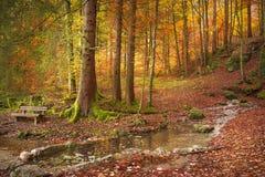 Wald in den Herbstfarben Stockfotografie