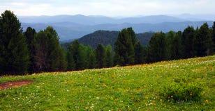 Wald in den hohen Bergen lizenzfreies stockfoto