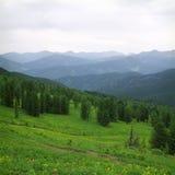 Wald in den hohen Bergen lizenzfreie stockfotos