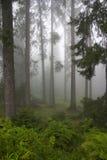 Wald in den Nebeln Stockfotos