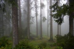 Wald in den Nebeln Stockfoto