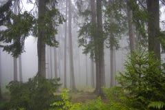 Wald in den Nebeln Lizenzfreie Stockfotos