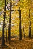 Wald in den schönen Herbstfarben an einem sonnigen Tag Lizenzfreie Stockbilder