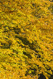Wald in den schönen Herbstfarben an einem sonnigen Tag Stockbild
