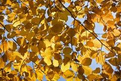 Wald in den schönen Herbstfarben an einem sonnigen Tag Stockbilder