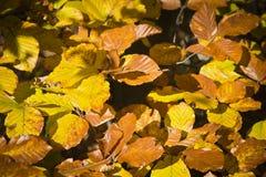 Wald in den schönen Herbstfarben an einem sonnigen Tag Stockfotos