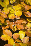 Wald in den schönen Herbstfarben an einem sonnigen Tag Stockfotografie