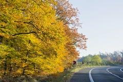 Wald in den schönen Herbstfarben an einem sonnigen Tag Lizenzfreies Stockfoto