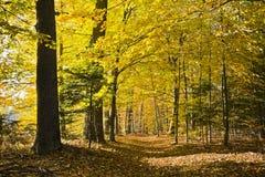 Wald in den schönen Herbstfarben an einem sonnigen Tag Lizenzfreie Stockfotos