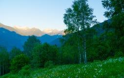 Wald in den Schweizer Bergen Stockbild