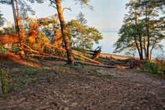 Wald in den Strahlen des Sonnenuntergangs Stockfoto