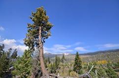 Wald in den Teufeln Postpile Lizenzfreies Stockbild