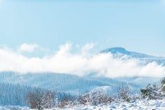 Wald, der auf Spitze des Felsens aufstellt lizenzfreie stockfotos