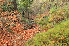Wald in der böhmischen Schweiz Lizenzfreies Stockbild