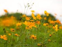 Wald der Blumen Lizenzfreies Stockbild