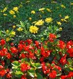 Wald der Blumen stockfotografie