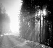 Wald an der Dämmerung Stockbild