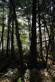 Wald an der Dämmerung Lizenzfreie Stockbilder