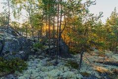 Wald an der Dämmerung Stockfoto