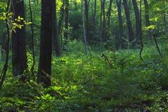 Wald in der Eiszeit-Spur, Wisconsin Lizenzfreies Stockfoto