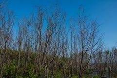 Wald in der Flussmündung Stockbild