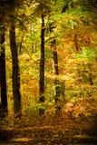 Wald in der Herbstszene Lizenzfreies Stockfoto