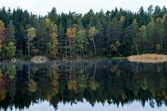 Wald, der im See sich reflektiert Stockbild