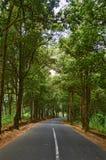 Wald der kurvenreichen Straße Stockfoto