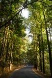 Wald der kurvenreichen Straße Stockfotos