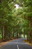 Wald der kurvenreichen Straße Lizenzfreies Stockfoto