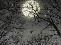 Wald in der Nacht lizenzfreies stockbild