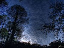 Wald in der Nacht Lizenzfreie Stockfotos