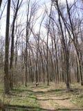 Wald in der Natur Lizenzfreies Stockfoto