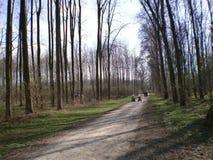 Wald in der Natur Stockfotos