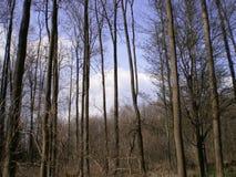 Wald in der Natur Lizenzfreie Stockbilder