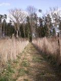 Wald in der Natur Lizenzfreie Stockfotografie