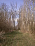 Wald in der Natur Lizenzfreies Stockbild