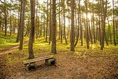 Wald der Ostsee in Polen lizenzfreie stockfotos
