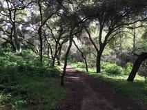 Wald, der Pfad wandert Stockfotos
