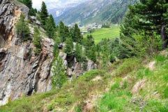 Wald der Schweizer Kiefer von Obergurgl, Österreich Lizenzfreie Stockfotos