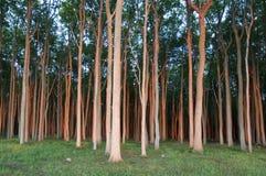 Wald in der Sonnenuntergangleuchte Stockfotos